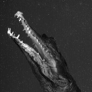 Képi mutációk – Hodosy Enikő Projections című fotósorozata