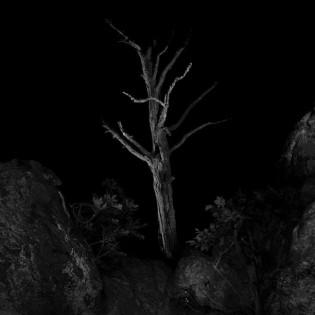 Erdő. Törcsi András fotói